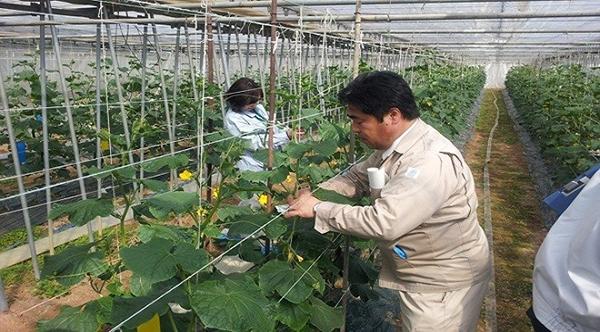 Xuất khẩu lao động ngành nông nghiệp tại Nhật Bản